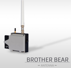 Antenne Brother bear